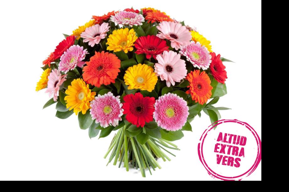 gerbera's bloemen