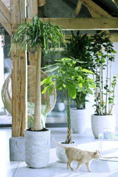 planten pot